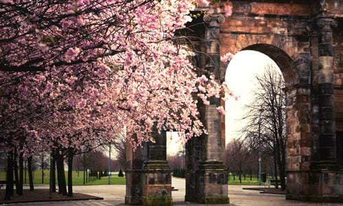 Mclellan Arch at the entrance of Glasgow Green surrounded by cherry blossom